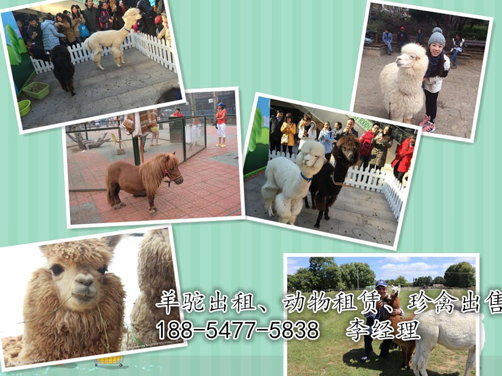 海口出租马戏团动物展览