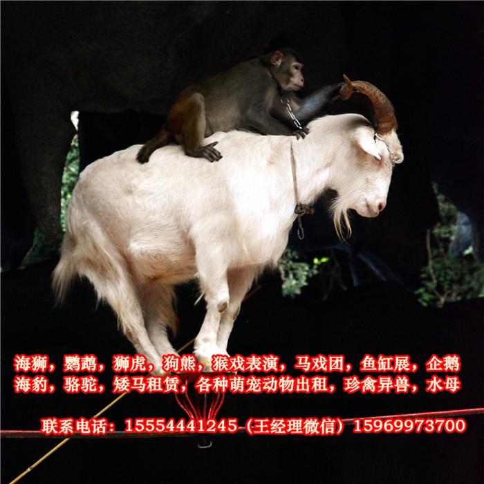 从羊驼出租,百鸟珍禽展,马戏团动物表演,海狮表演,鹦鹉表演,鱼缸展