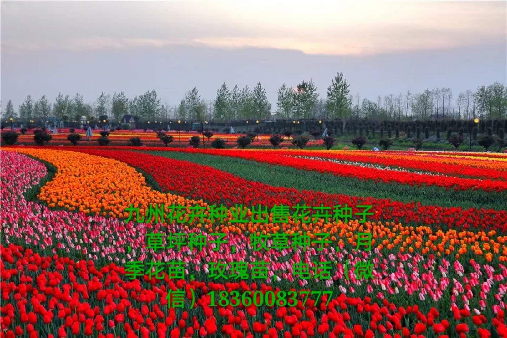 玫瑰风景背景图