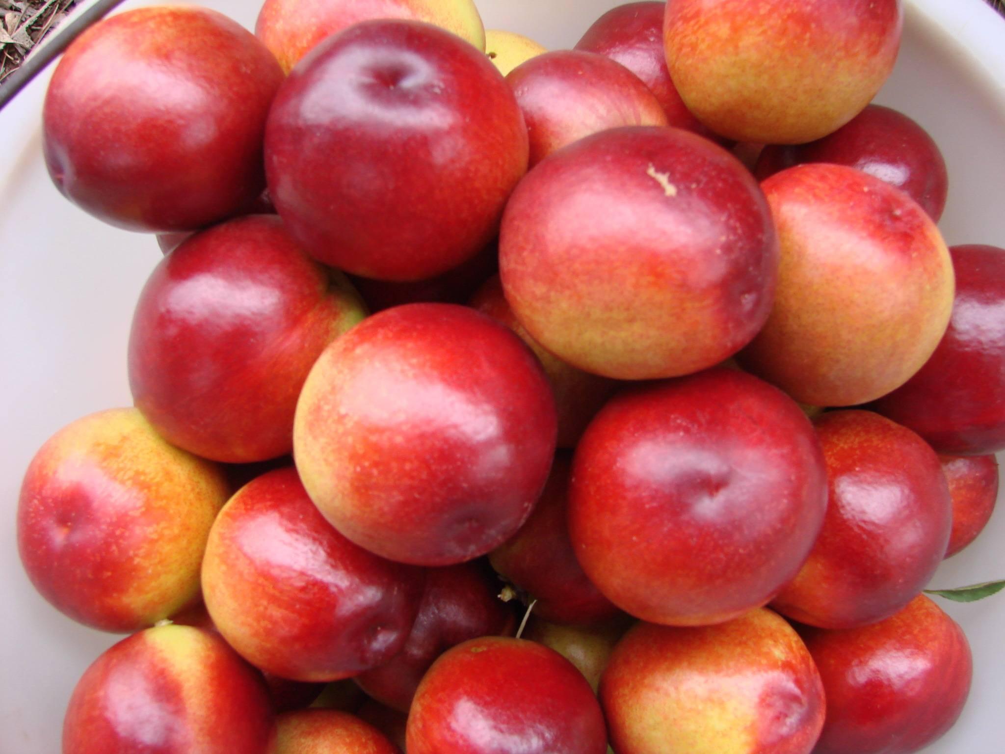最近热卖的油桃价格多少钱哪里产地好