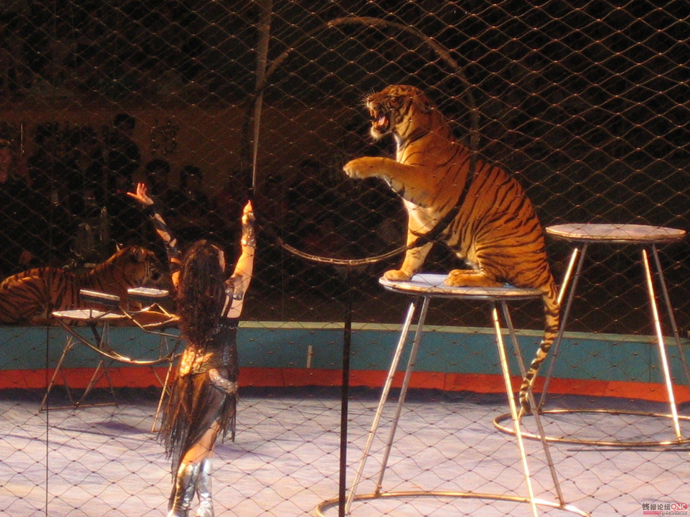 马戏团,企鹅展,杂技表演,&nbsp&nbsp&nbsp羊驼出租,海洋动物展,鹦鹉