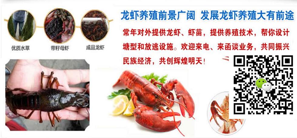 上海小龙虾养殖条件小龙虾养殖池塘设计图