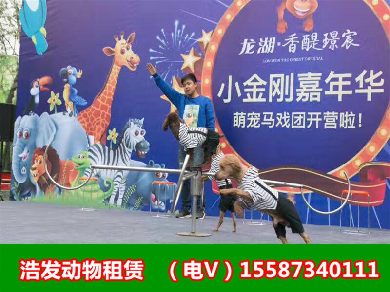 金华马戏团表演有哪些动物杂技