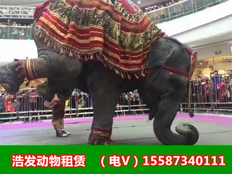 贵阳杂技表演出租动物杂技租赁行情