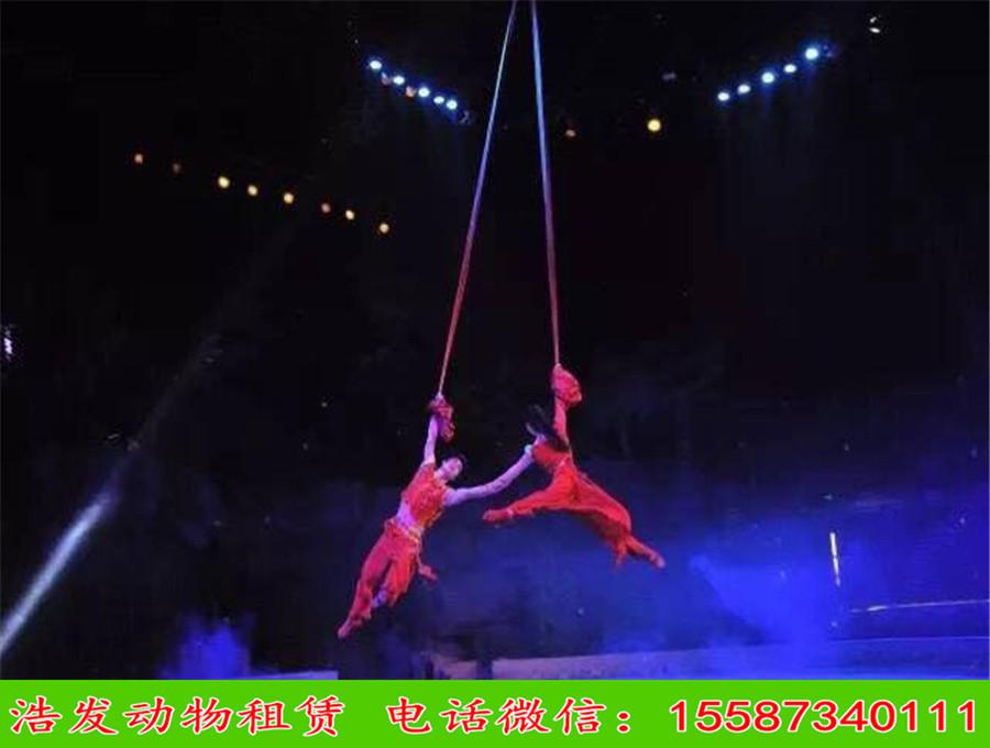 葫芦岛马戏动物表演出租