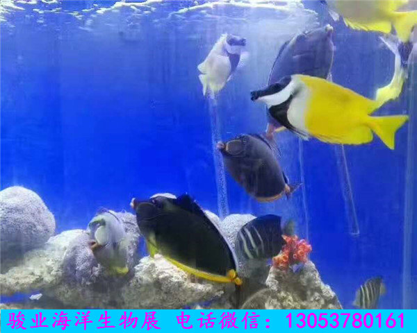 壁纸 动物 海底 海底世界 海洋馆 水族馆 鱼 鱼类 600_480