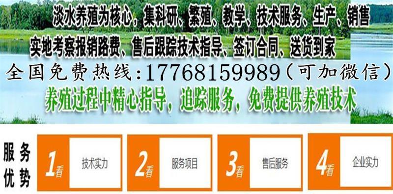 浙江省小龙虾养殖池塘设计图哪有虾苗场