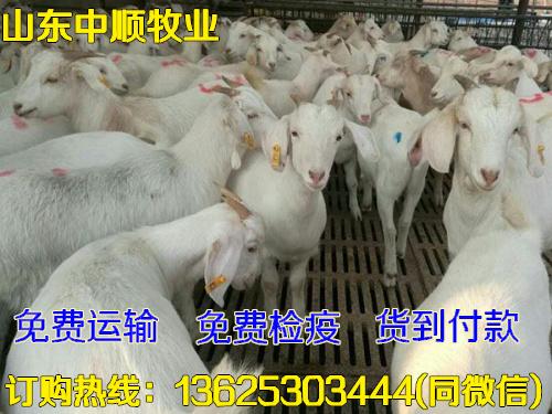 白山羊羊场广西南宁
