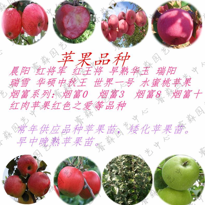 种植寒富苹果苗苹果树需要什么条件