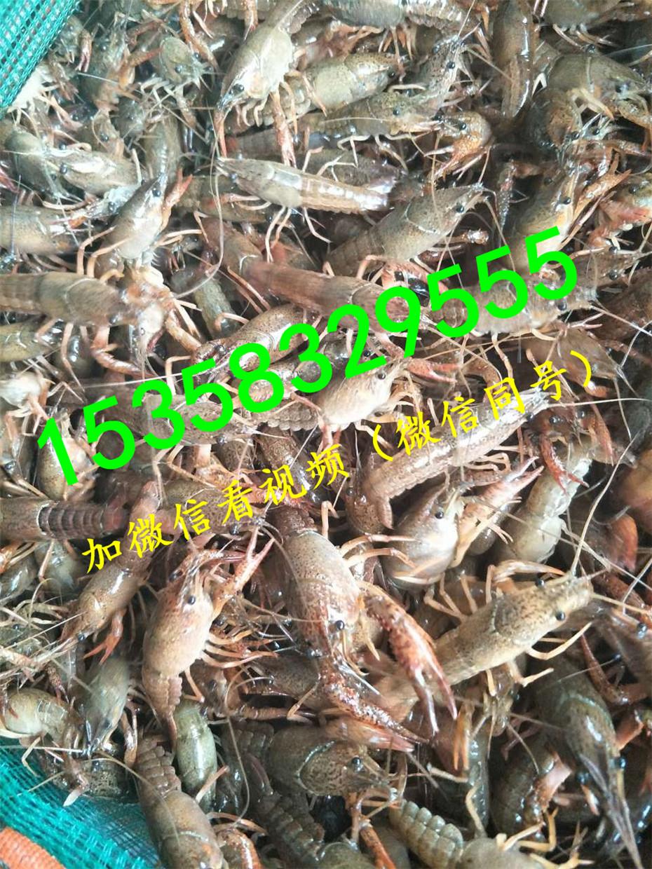 扬州龙虾养殖池设计图图片