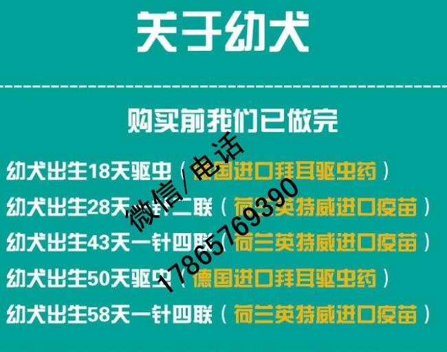 杭州纯种的疆域牧羊犬幼犬几多一只