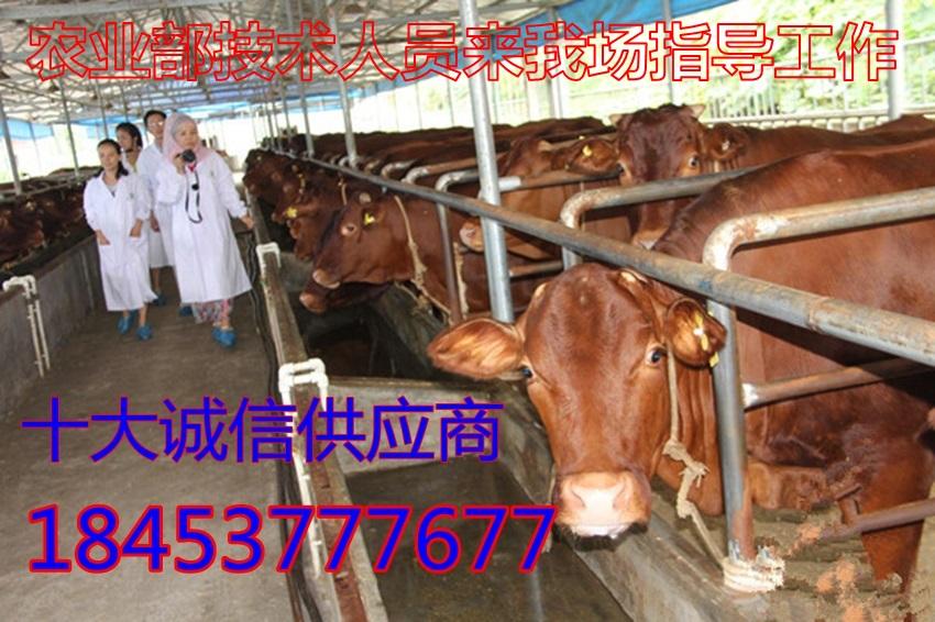 龙泉驿区4个月大的黄牛价钱几多钱