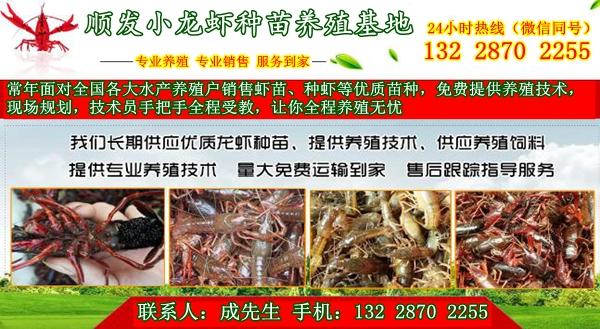 溫州供應小龍蝦苗種8月報價