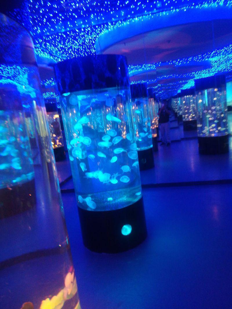 浙江温州万达嗒咪动物园家门口的动物园海洋动物展